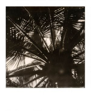 SX70 - Mekong Delta - Above our heads
