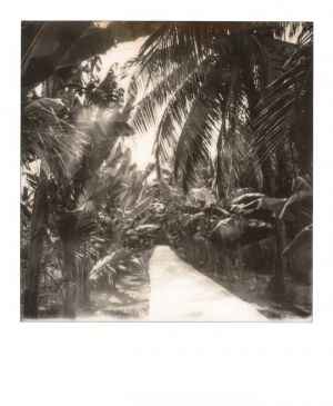 SX70 - Ben Tree - Palm trees road